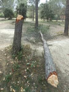 Au bois de la Bosque